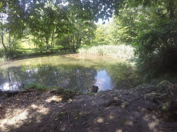 einige so kleine Teiche/Lacken gibt es hier im Wald...