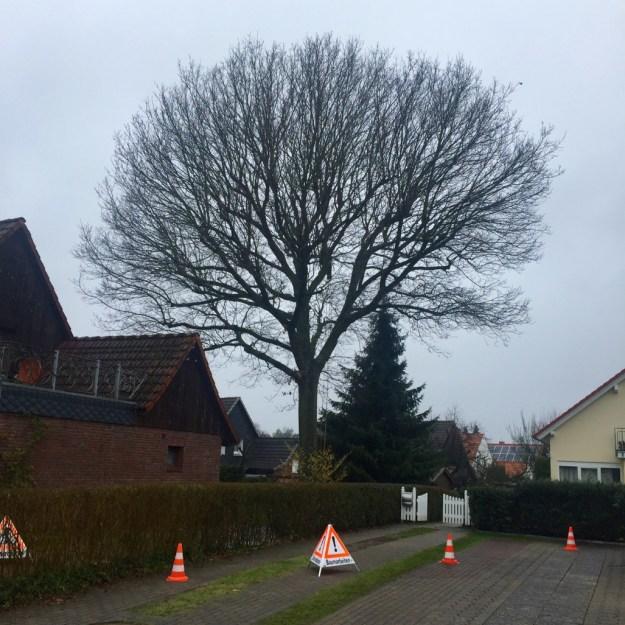 Baumpflege Kronenschnitt Hamburg