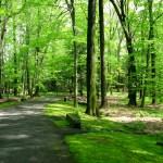 Verkehrssicherungspflicht und Lichtraumprofilschnitt Hamburg Baumpflege