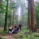 Zapfenpflücken Team Green