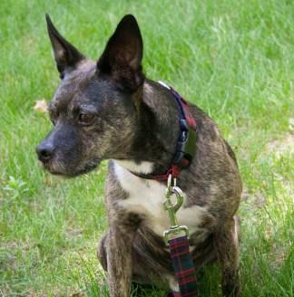 Homespun 1-Inch Tartan Dog Collar and Leash Set