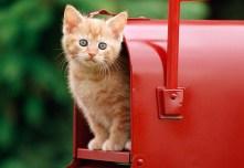 Chapter 1: The Kitten Sale - Socks Book Project