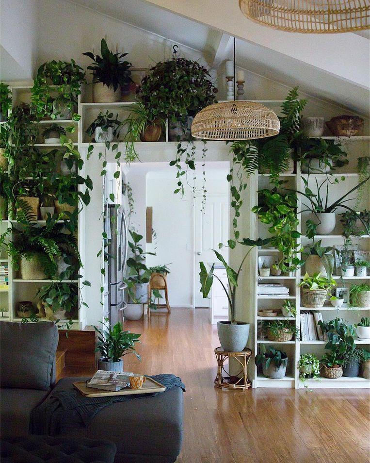 hoe creëer je jouw eigen urban jungle - Kimberly Eijkemans - interieurontwerp - interieuradvies - Brabant - Uden - Oss - Veghel