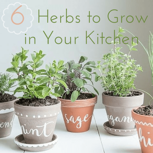 6-herbs-kitchen