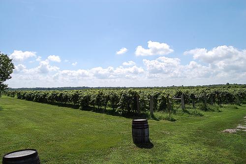 davenport winery kansas