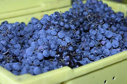 holy-field winery kansas