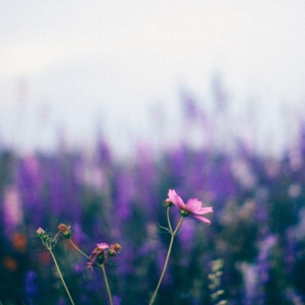 Floral Fine Art Prints - Kim Graham
