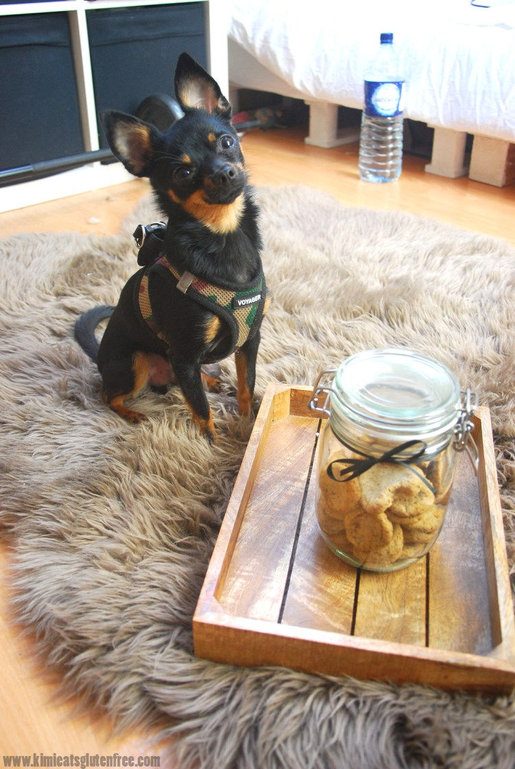 Homemade sardine dog treats - gluten free dog cookies - www.kimieatsglutenfree.com
