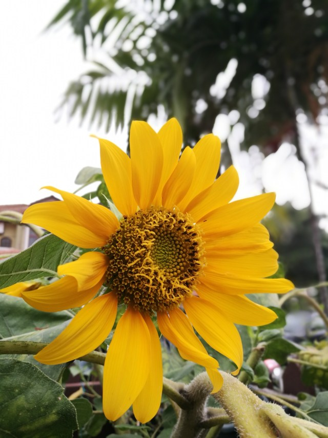 A dash of sunflower