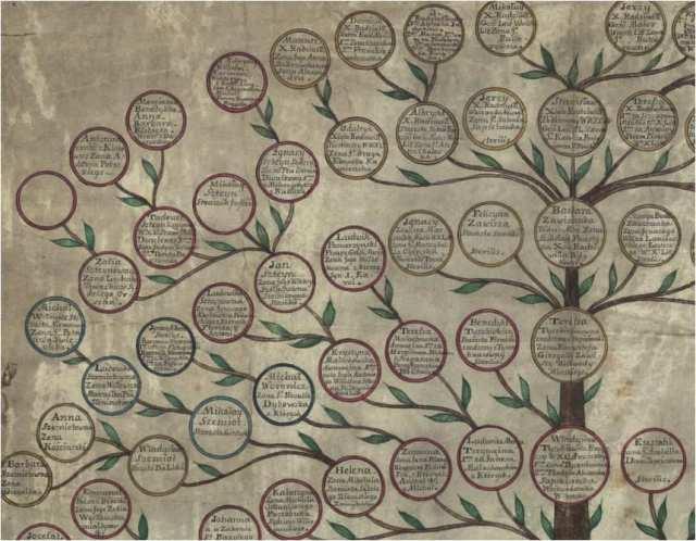 Jak wygląda drzewo genealogiczne Tyszkiewiczowie