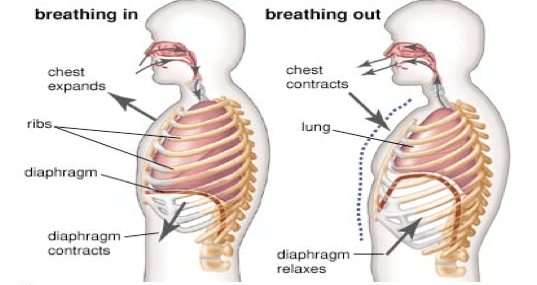 Breathing in martial arts