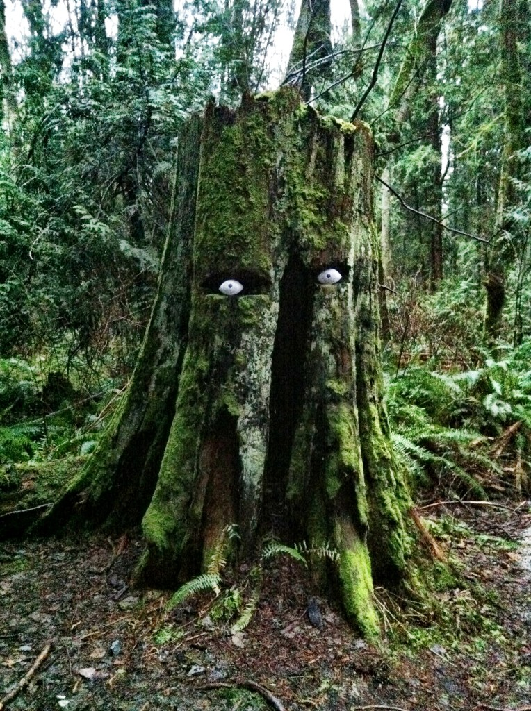 Trees with Eyes