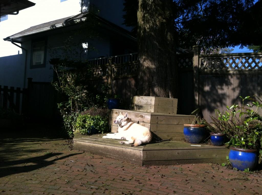 Cleo in her yard