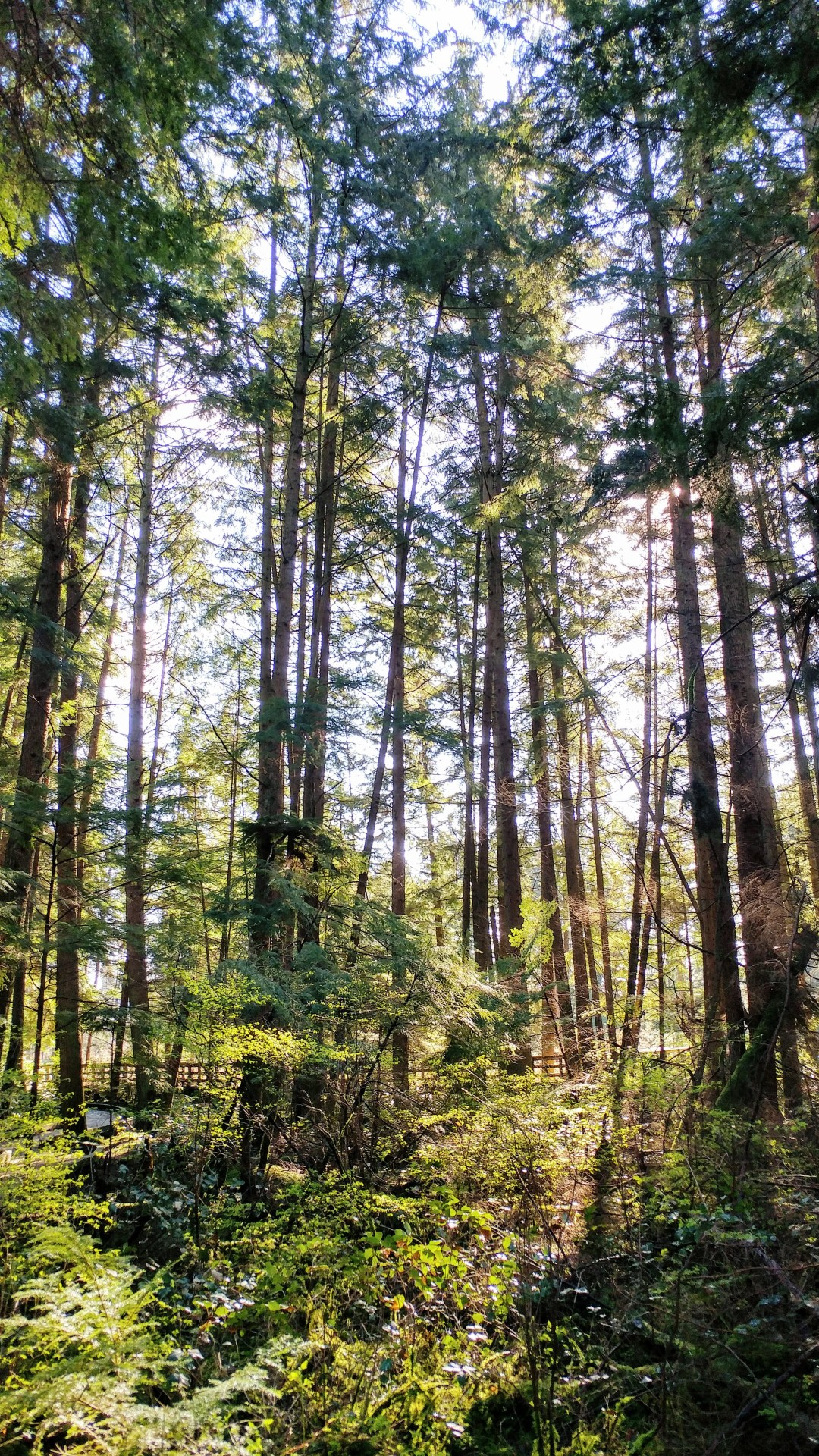 Forest in spring, Vancouver BC