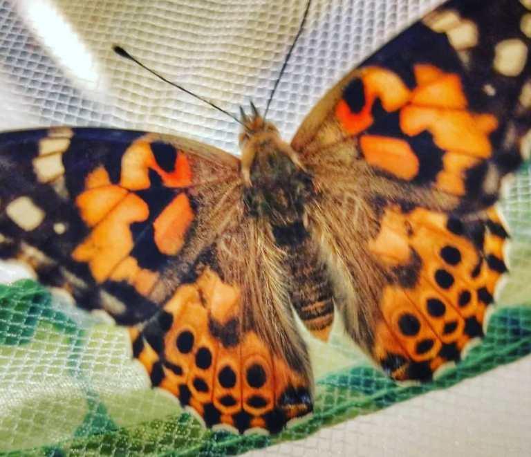 Read more about the article Kriebelbeestjes: van rups tot vlinder!