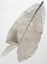 science-centerLeaf
