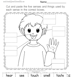 five sense worksheet: NEW 989 FIVE SENSE ORGANS WORKSHEETS FOR GRADE 2 [ 1035 x 800 Pixel ]
