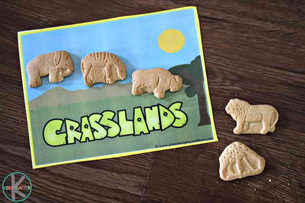medium resolution of FREE Animal Habitats Activity with Animal Cookies