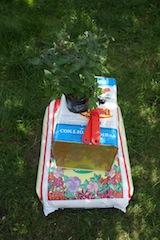 Upcycling für Anfänger: Erde, Pflanze, Dosenöffner und ein alter Olivenöl Kanister. So rettet man die Welt. foto (c) Kinderoutdoor.de