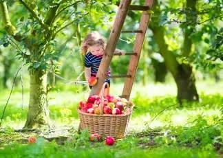 Fall Apples Wallpaper Fingerspiele Amp Gedichte Zum Herbst Kinderspiele Welt De