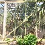 Dauergehege Eichhörnchenschutzstation Eckernförde