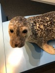 Zoologisches Museum Kiel