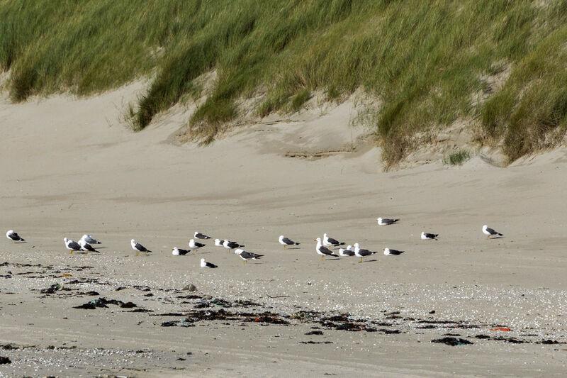 Kinderweltreise  Niederlande  Tiere  Pflanzen