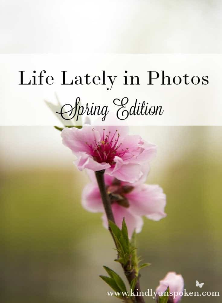 Life Lately in Photos- Spring Edition