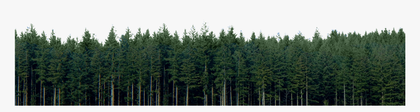 Evergreen tree pine evergreen transparent background png clipart. Transparent Pine Trees Png High Resolution Pine Trees Png Download Kindpng