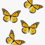 Freetoedit Butterflies Yellow Butterfly Blue Butterfly Aesthetic Hd Png Download Kindpng