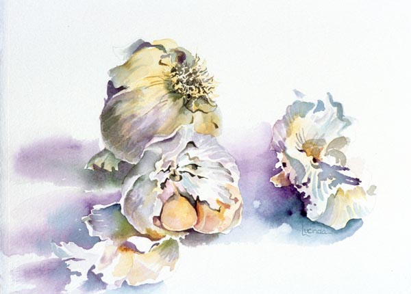 Garlic Cloves by Lucinda Hayes