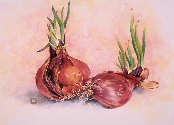 Red Onions by Lucinda Hayes