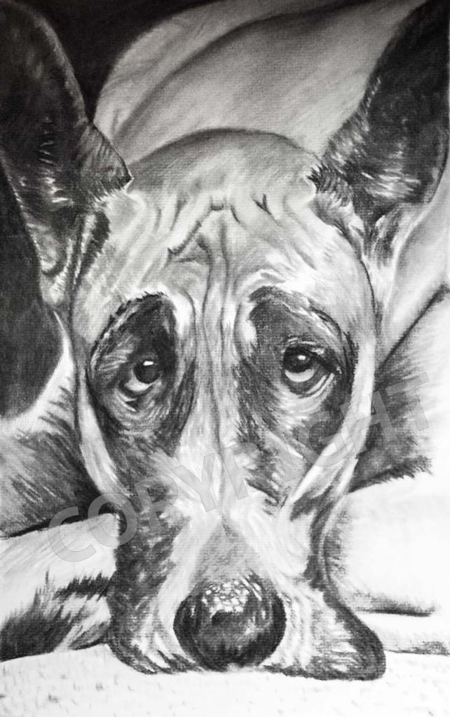 dog-carpet-charcoal-drawing-portrait-carol-artis
