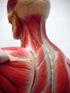 Artrosi Cervicale o Cervicalgia