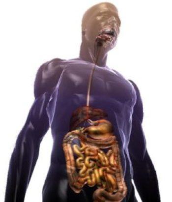 sistema gastro-enterico-anale