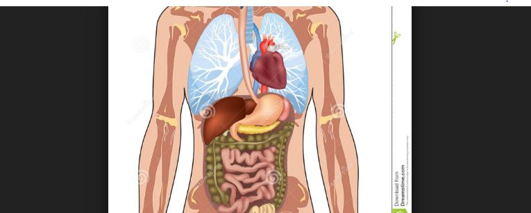 Hepatoesplenomegalia: doença hpm o que é?