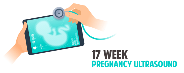 17th Week Pregnant Ultrasound