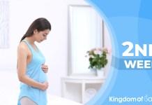 pregnancy week 2