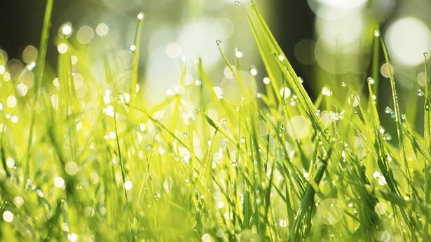 向往小草般坦然洒脱的人生