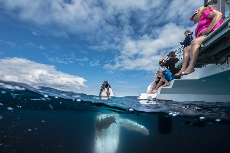 Whale Watch Cruise  Kingfisher Bay Resort  Fraser Island Accommodation