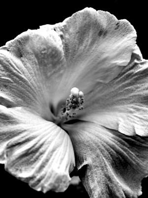 Flowers_023_1