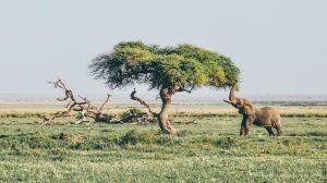 Photo Gallery Safari Kenya Watamu 2020 1