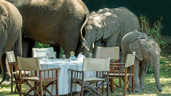 Elephant herd - Giraffe Manor Safari 6gg Masai Mara Nairobi Lake Nakuru