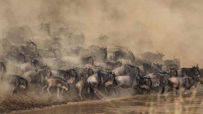 Safari 4gg da Nairobi Masai Mara e Amboseli Safari 4 Days Masai Mara