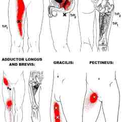 Gluteus Muscles Diagram Pain Ladder Definition The Definitive Guide To Hip Adductor Anatomy, Exercises & Rehab
