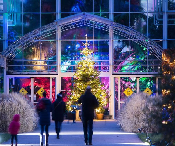Glow 2018 at Wisley 2018