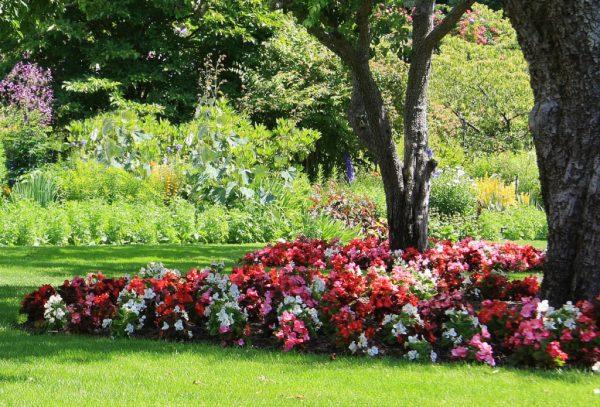 coleus garden guides - ftempo