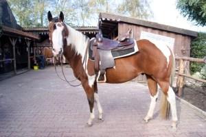 Hot Gunner, Paint-Horse