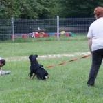 Sporthund-VPG