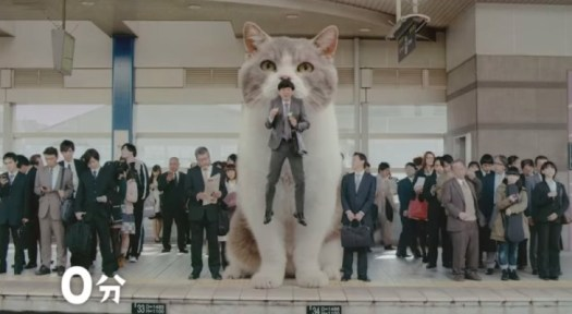 Fit's giant cat